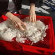 Alpakawolle gewaschen